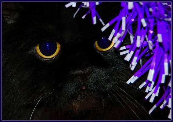 Кот во тьме
